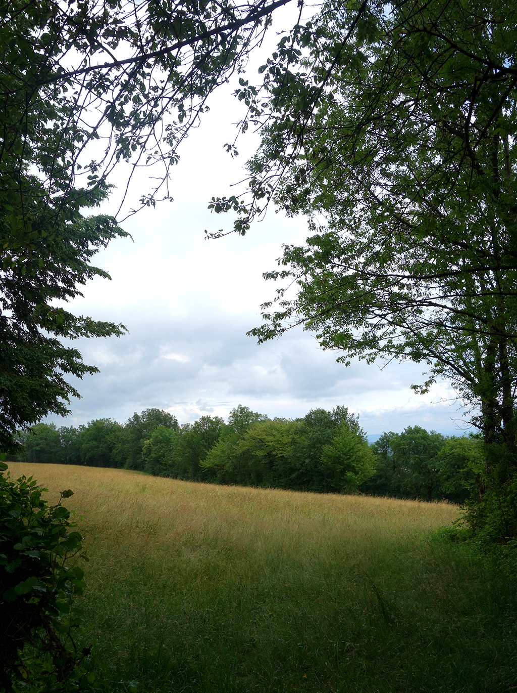 A field near where I was attacked by dogs in France