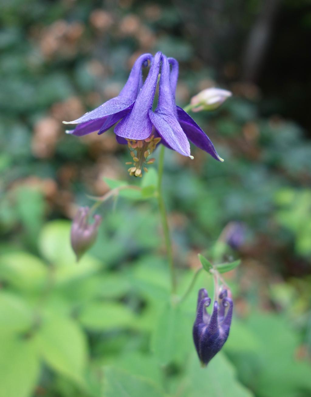 Annecy Wild Purple Fuscia