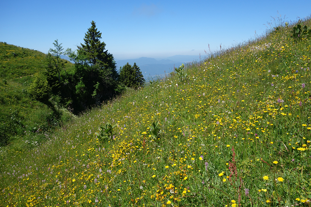 Wildflowers on Semnoz in France